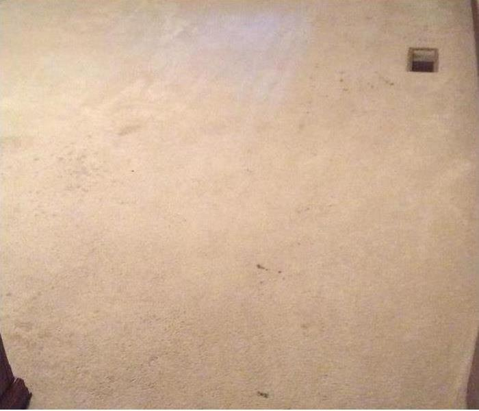 Carpet Cleaning Grenada MS Before